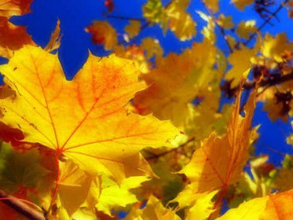 Осенняя распродажа | Ярмарка Мастеров - ручная работа, handmade