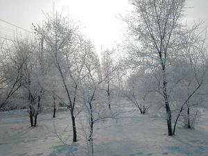 Зимняя сказка: иней или изморозь?   Ярмарка Мастеров - ручная работа, handmade