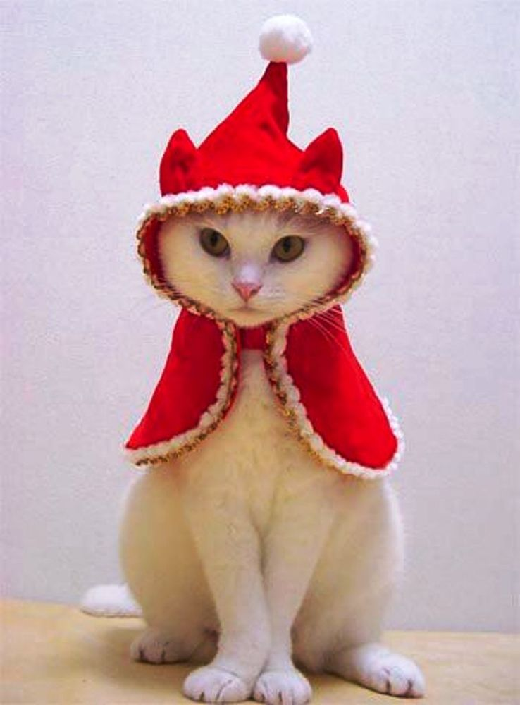 Christmas Cats! And a Little About the Safety of Pets During the Holidays, фото № 2