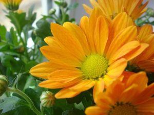 Оранжевое настроение. Ярмарка Мастеров - ручная работа, handmade.