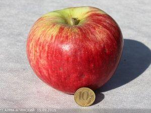 Апорт (яблоки !). Ярмарка Мастеров - ручная работа, handmade.