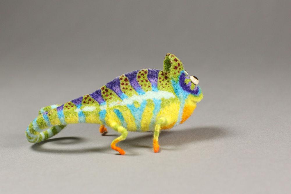 ацикулярис, миниатюра, хамелеон