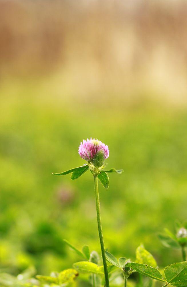 травы и специи, уход за кожей, красота и уход