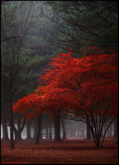 Red autumn.