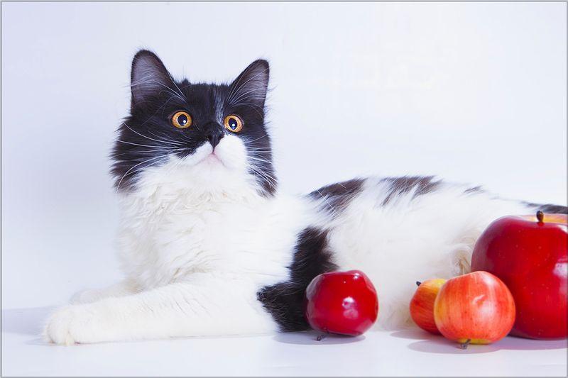 истории, коты, кошки, котики, помощь животным, поддержка