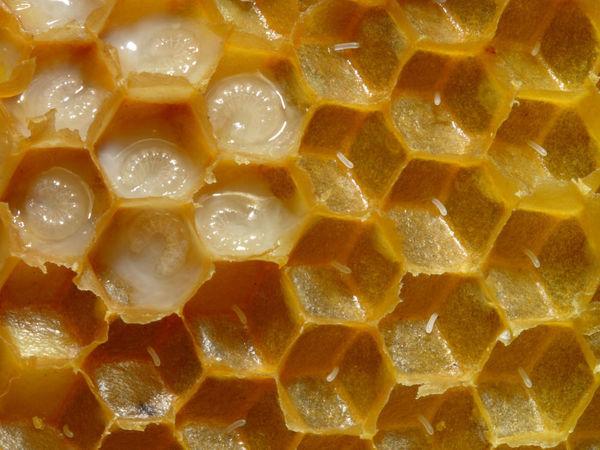 Косметика KremDoma с трутневым молочком и другими продуктами пчеловодства | Ярмарка Мастеров - ручная работа, handmade