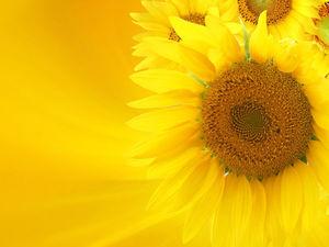 Жизнерадостный желтый — любимый цвет экстравертов. Ярмарка Мастеров - ручная работа, handmade.