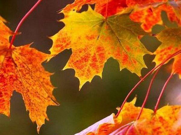 7 способов полюбить осень | Ярмарка Мастеров - ручная работа, handmade