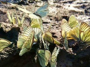 Сколько общего у Бабочки и Человека!. Ярмарка Мастеров - ручная работа, handmade.