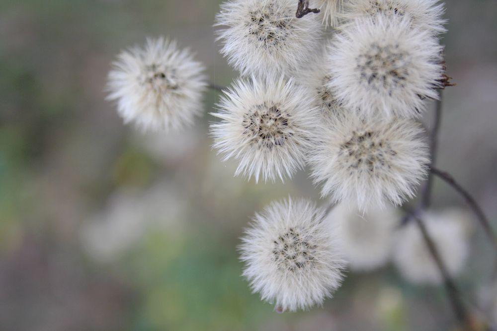 травы, папоротник