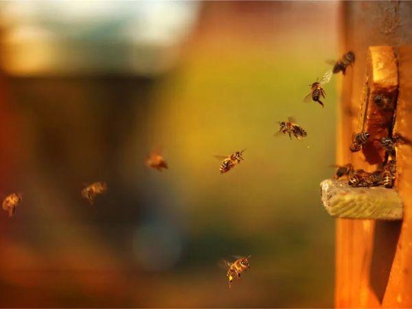Почему жужжит пчела? | Ярмарка Мастеров - ручная работа, handmade