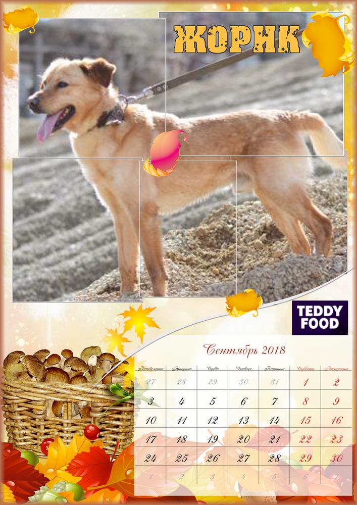 teddy food, приют, приют для животных, животные, благотворительность, помощь животным, помощь, помощь собакам, собака, щенок