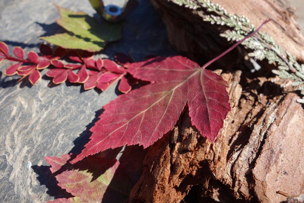 пресс растений, поделки в школу