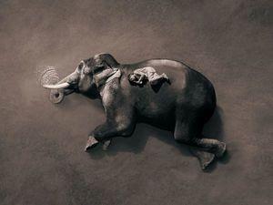Простое величественное . Фотограф Грегори Кольбер. Ярмарка Мастеров - ручная работа, handmade.