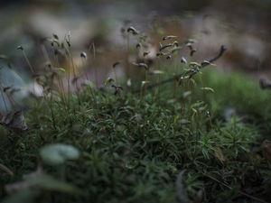 Мох, мох, много мха не бывает!. Ярмарка Мастеров - ручная работа, handmade.