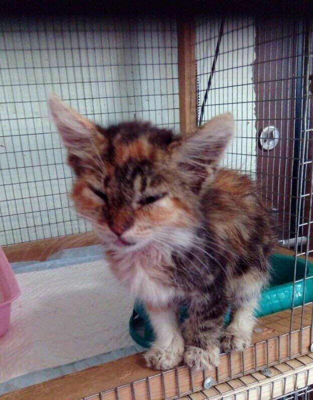 кошечка ищет дом, трёхцветная кошка, котенок ждет помощи, помощь котенку