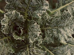 Живые Души Деревьев | Ярмарка Мастеров - ручная работа, handmade
