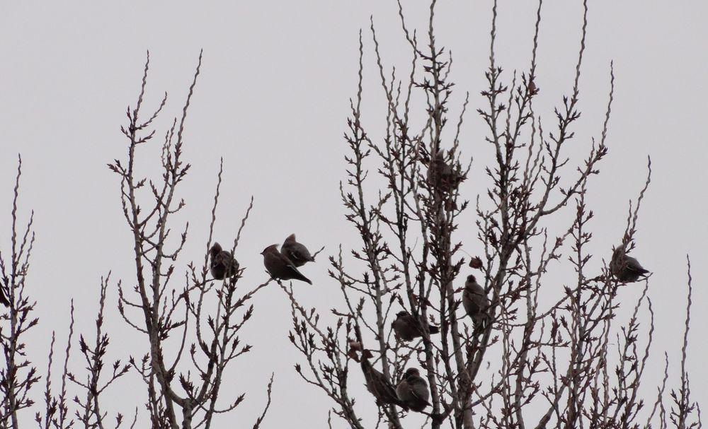 зимние птицы, травяная лавка виктории, деревья, кот, птицы за окном, кормушка для птиц на окно, кормушки для птиц идеи