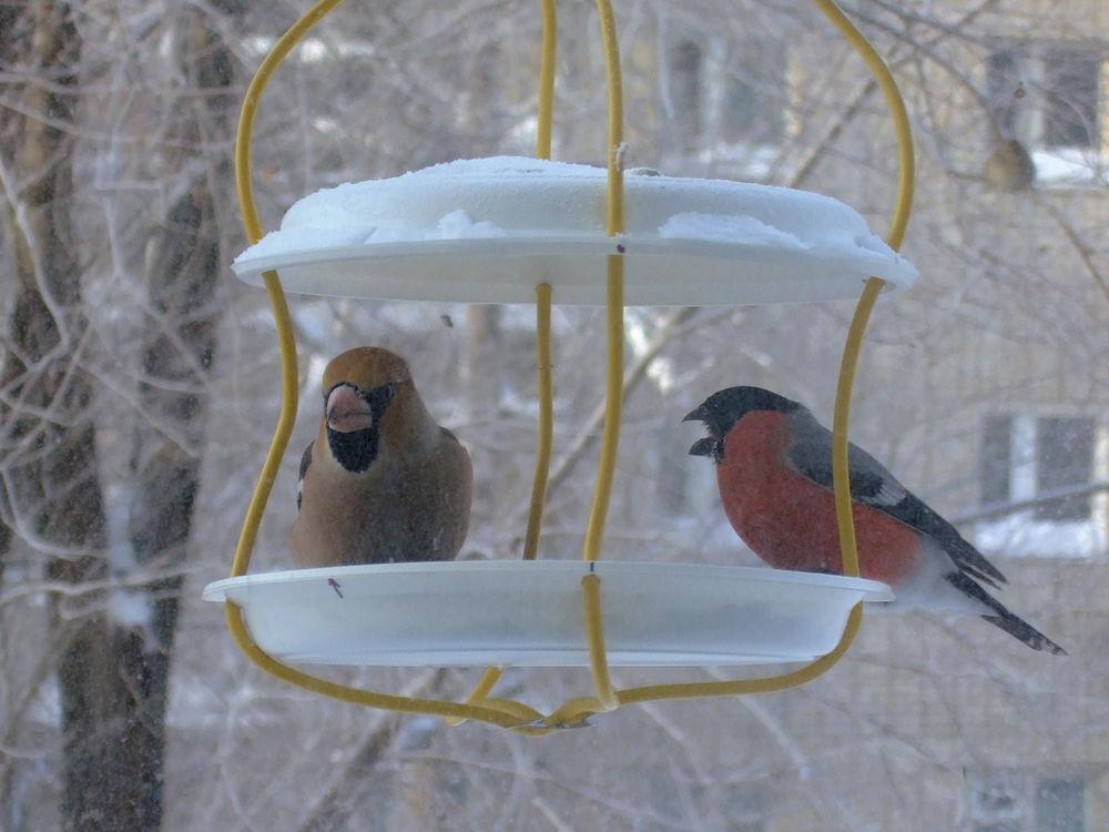 Кормушка для птиц на зиму как сделать