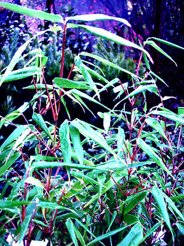 бамбук, пряжа, вязание спицами, эко, эко материалы