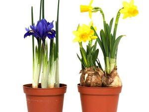 Весенние цветы в горшках.7 видов..На заказ 8 марта.. Ярмарка Мастеров - ручная работа, handmade.