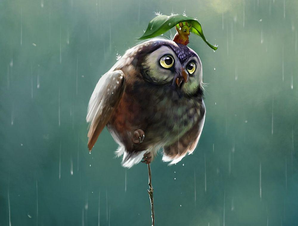 Смешные рисунки животных птиц, днем