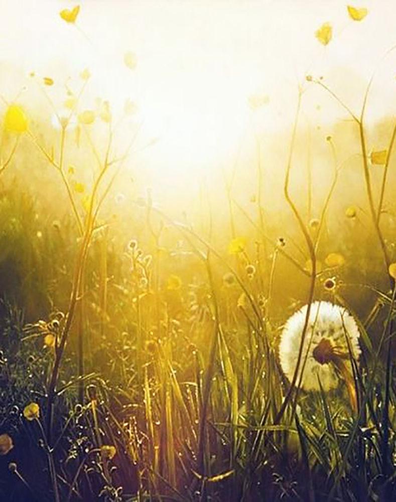 медовый, тканый пояс, луговые травы