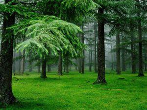 Целительные свойства хвойных лесов | Ярмарка Мастеров - ручная работа, handmade