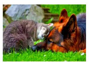 Сопереживать-это не слабость! Будьте добрее друг к другу. Ярмарка Мастеров - ручная работа, handmade.