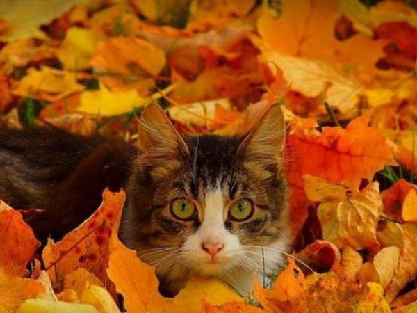 Кошка - осень | Ярмарка Мастеров - ручная работа, handmade