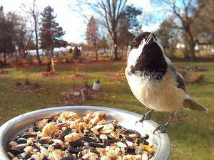 Птицы в кормушке | Ярмарка Мастеров - ручная работа, handmade
