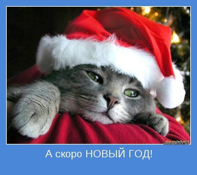 любимый скоро новый год картинки лоскутово собрал
