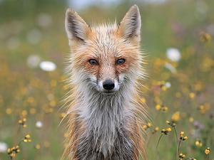 Фотографы на страже природы: победители The Nature Conservancy Photo Contest 2018. Ярмарка Мастеров - ручная работа, handmade.