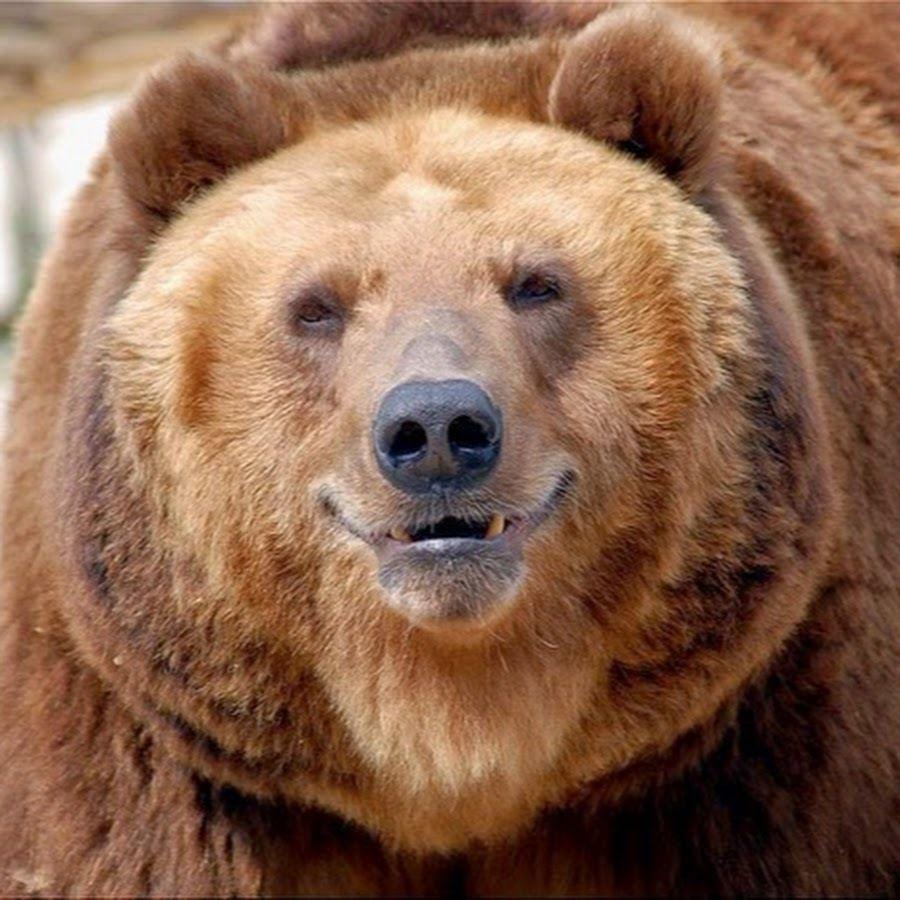 конечно хотел ржачные фото с мордой медведя настоящему