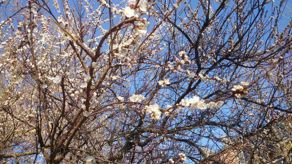 весна, сады