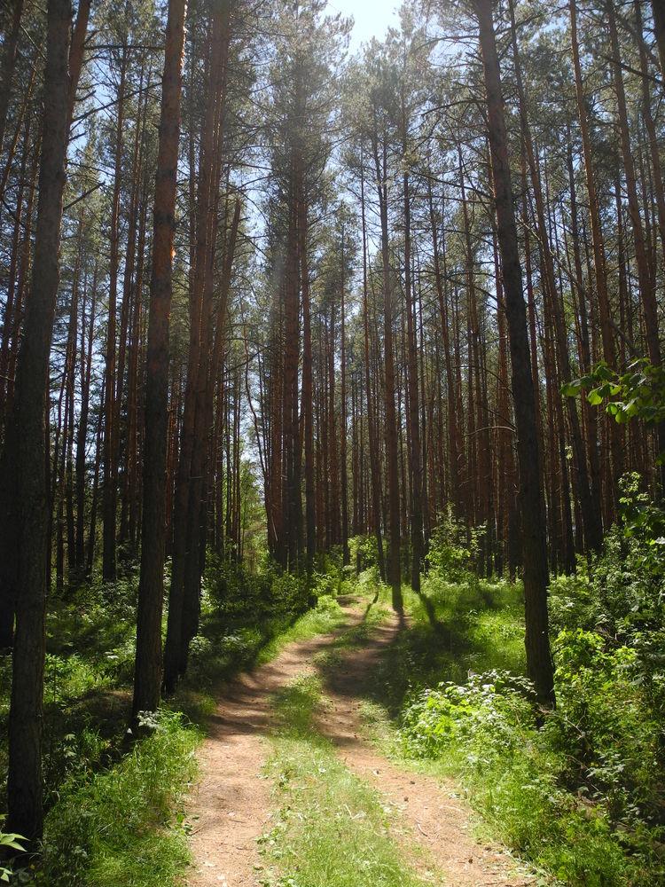 переезд в деревню, почему стоит жить в деревне, жить в гармонии с природой
