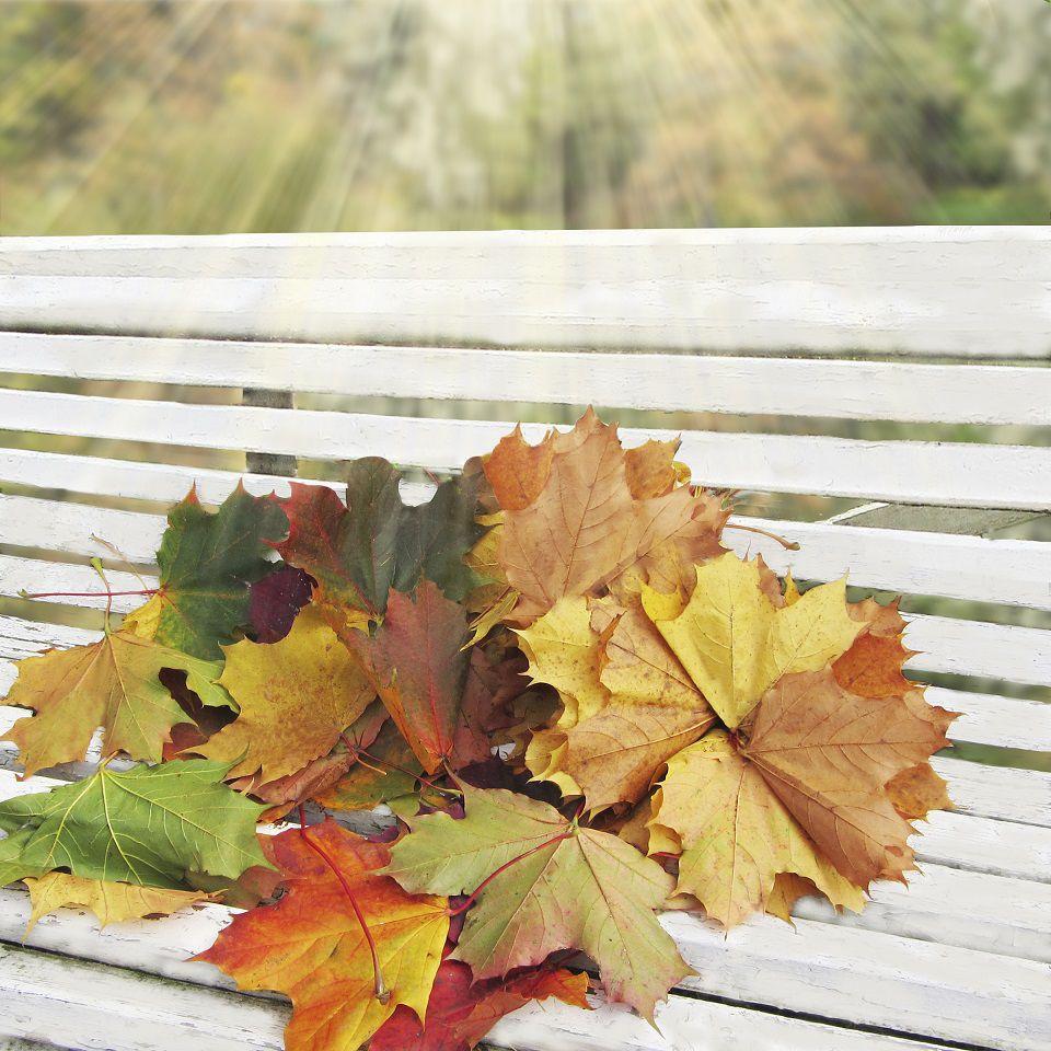 осень, осенние листья, осенний, осенние краски, жёлтый, зелёный, красный, белый, охра, осенний пейзаж, фотокартина осень, фотокартина листья, осенняя, листья осенние, скамейка