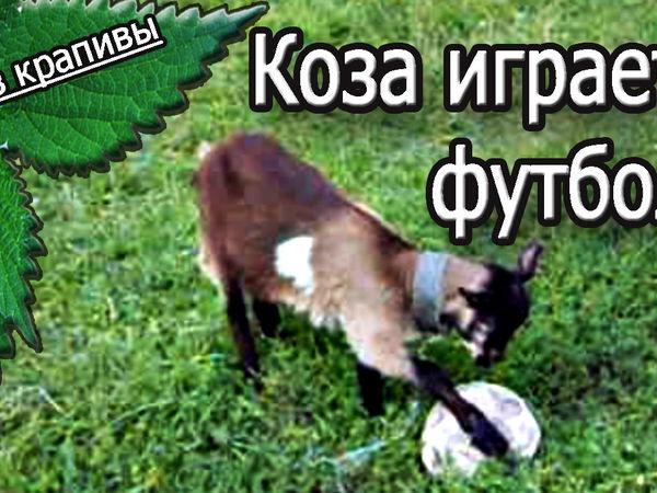Коза, гол и футбол! | Ярмарка Мастеров - ручная работа, handmade