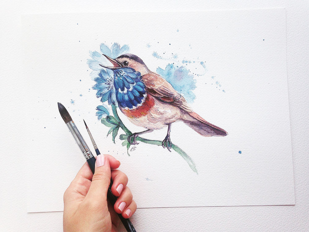 акварельная живопись, цикорий
