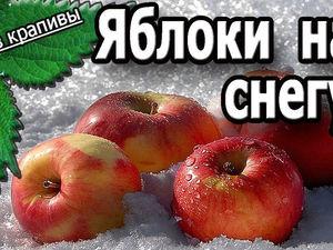 Яблоки на снегу. Сбор яблок весной. Жизнь на поместье. Все из крапивы. | Ярмарка Мастеров - ручная работа, handmade
