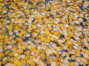 Осень. Ярмарка Мастеров - ручная работа, handmade.