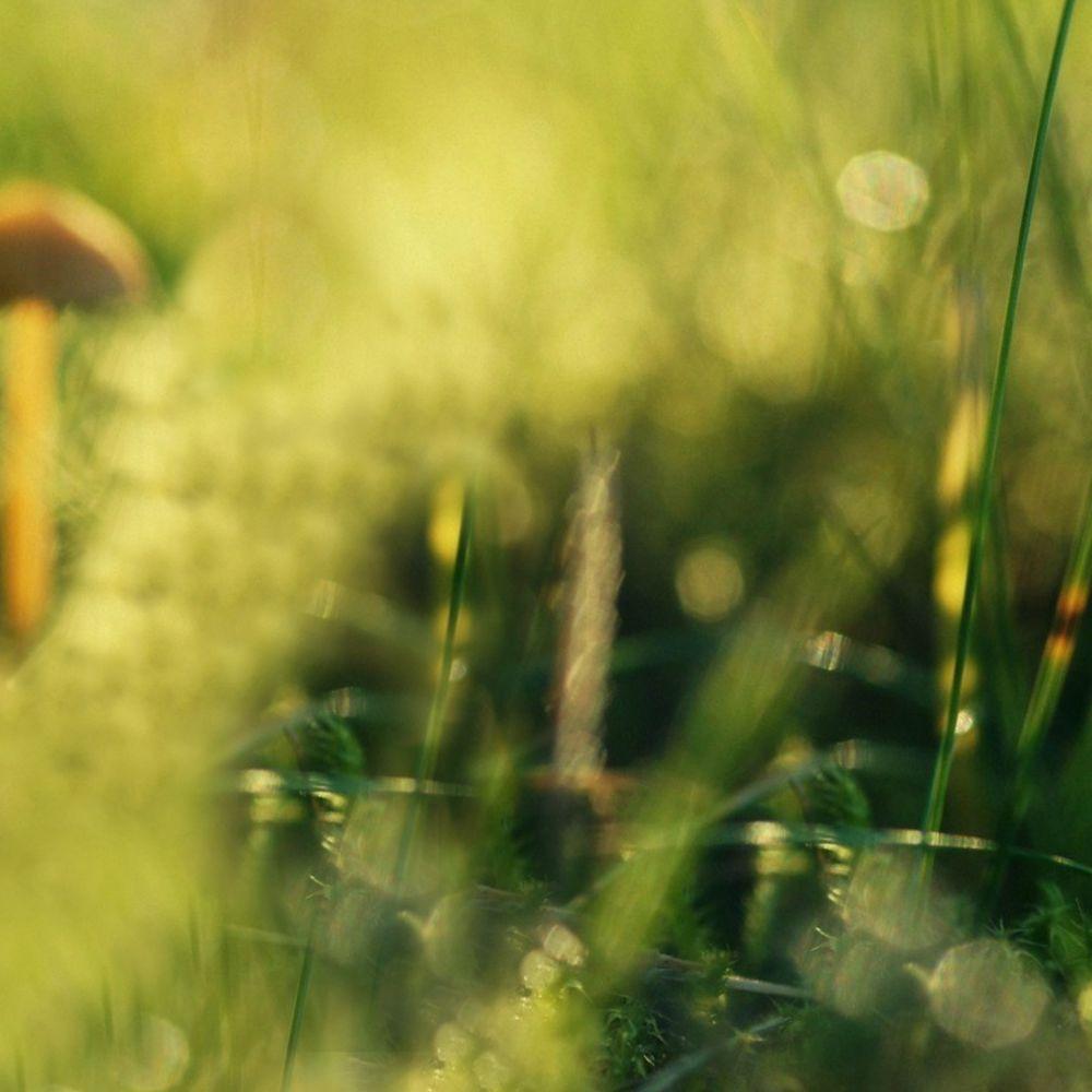 грибная нота, грибные ноты в духах, подберезовик, аромат грибов, парфюмерные тотемы, ароматы леса