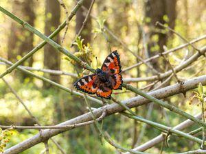 Броши бабочки!!! | Ярмарка Мастеров - ручная работа, handmade