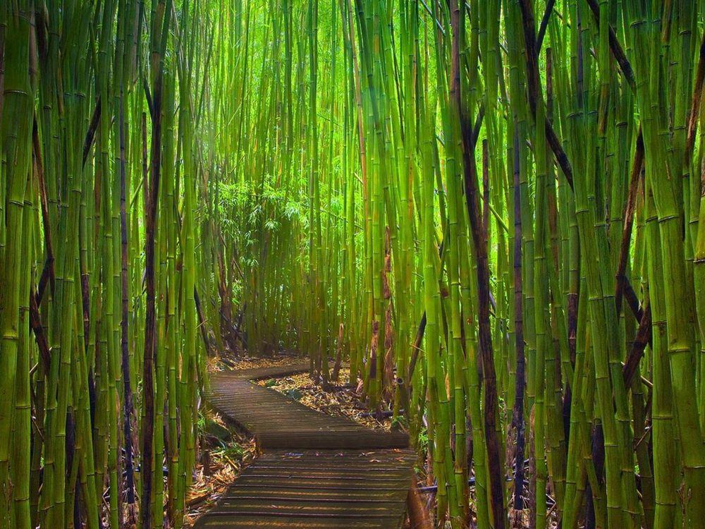Краски природы: 49 впечатляющих фотографий, фото № 19