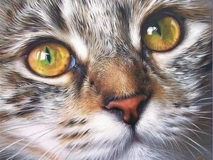 """Собираю ненужное от кошек и собак для приюта """"Дом Добра""""!. Ярмарка Мастеров - ручная работа, handmade."""