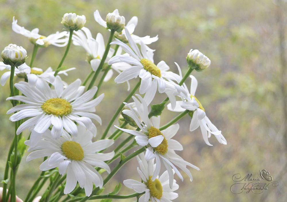 цветы из полимерной глины, жуковский, ромашка из полимерной, ромашка своими руками