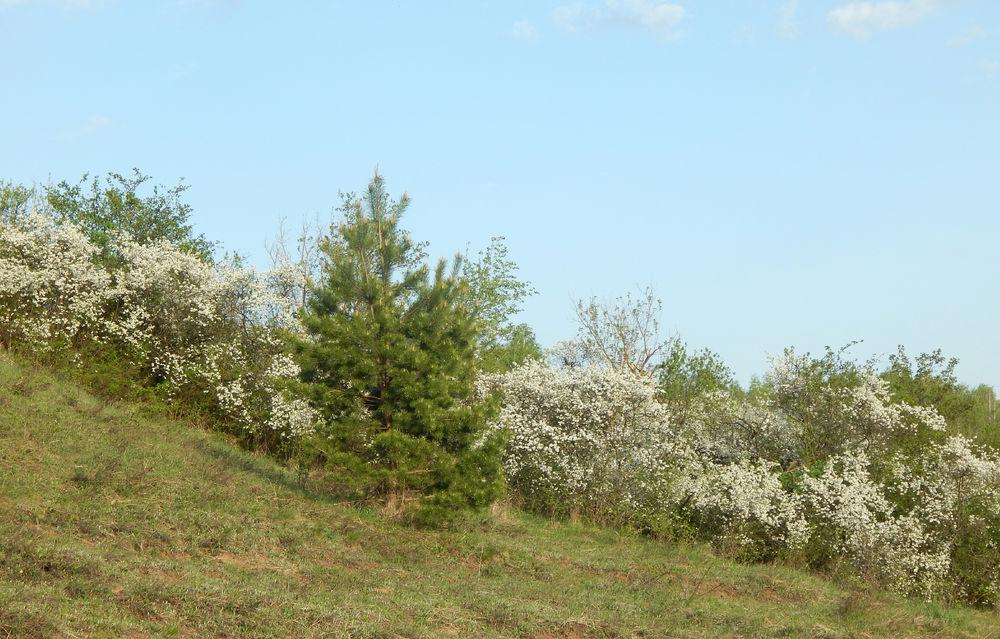 Цветущий край, Белгородчина., фото № 22
