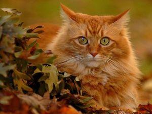 Кот – Зенитчик | Ярмарка Мастеров - ручная работа, handmade