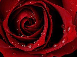 Красный цвет в наших сновидениях.. Ярмарка Мастеров - ручная работа, handmade.