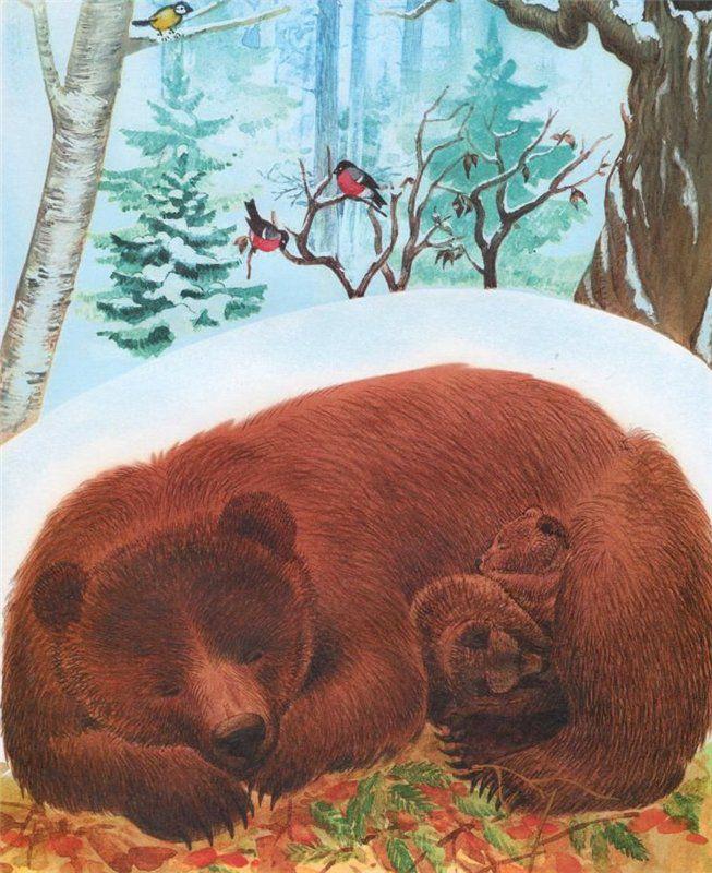 это где зимуют дикие животные картинки даже